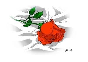 rosa-perez